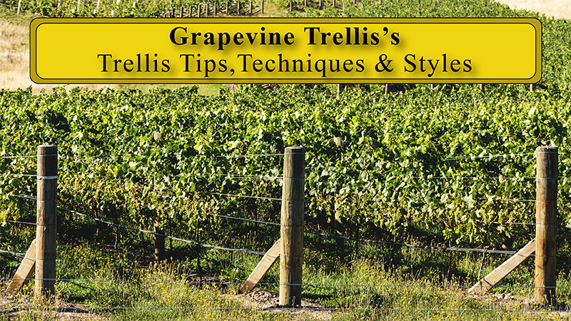Grape Trellis Systems The Total Wine System